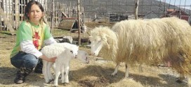 1.7.2014, Vijesti Online – Roma cattlewoman don't have where to go: I am going to beggars
